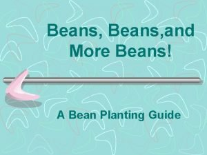 Beans and More Beans A Bean Planting Guide