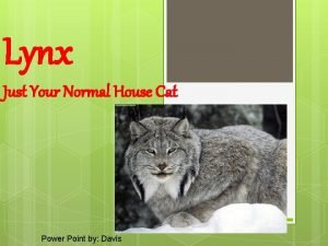 Lynx Just Your Normal House Cat Power Point