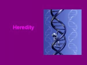 Heredity Mendel and Heredity Heredity is the passing