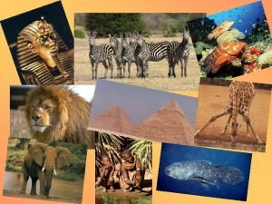 P Sahara v Egypte Savana Krter Ngorongoro Serengeti