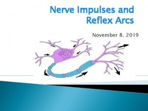 Nerve Impulses and Reflex Arcs November 8 2019