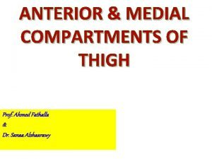 ANTERIOR MEDIAL COMPARTMENTS OF THIGH Prof Ahmed Fathalla