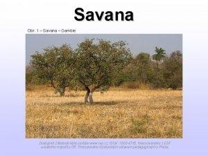 Savana Obr 1 Savana Gambie Dostupn z Metodickho