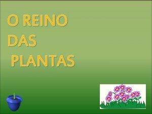 O REINO DAS PLANTAS AS PLANTAS SON SERES