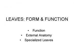 LEAVES FORM FUNCTION Function External Anatomy Specialized Leaves