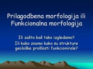 Prilagodbena morfologija ili Funkcionalna morfologija Ili zato ba