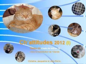 Chattitudes 2012 I Photos de Chats de lettres
