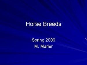 Horse Breeds Spring 2006 M Marler Horses breeds