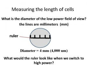 Measuring the length of cells What is the