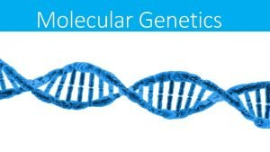 Molecular Genetics DNA Structure DNA Deoxyribonucleic acid DNA