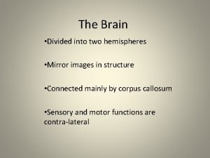 The Brain Divided into two hemispheres Mirror images