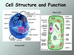 Cell Structure and Function Plant Cell Animal Cell