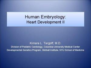 Human Embryology Heart Development II Kimara L Targoff