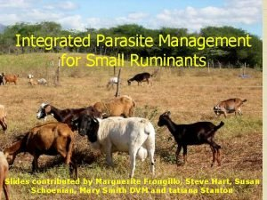 Integrated Parasite Management for Small Ruminants Slides contributed