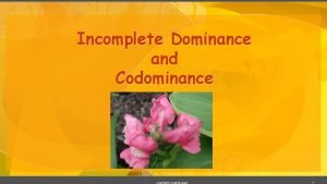 Incomplete Dominance and Codominance copyright cmassengale 1 Incomplete