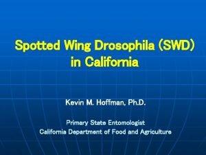 Spotted Wing Drosophila SWD in California Kevin M