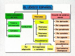 EL LXICO ESPAOL Lxico procedente del latn Palabras