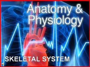 SKELETAL SYSTEM What is the skeletal system The