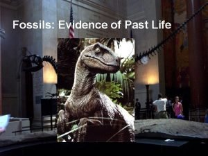 Fossils Evidence of Past Life Fossils Fossils are
