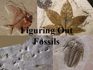 Figuring Out Fossils Geologic Timescale The Geologic Time