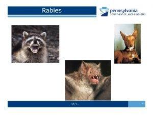 Rabies PPT 1 Rabies Defined Rabies is a
