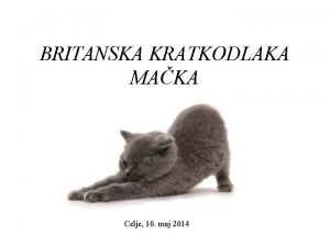 BRITANSKA KRATKODLAKA MAKA Celje 10 maj 2014 IZVOR