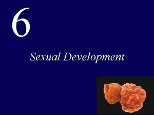 6 Sexual Development Fertilization Is the Fusion of