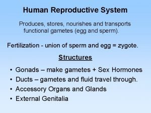 Human Reproductive System Produces stores nourishes and transports