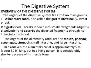 The Digestive System OVERVIEW OF THE DIGESTIVE SYSTEM