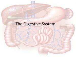 The Digestive System The Digestive System Hungry Anyone