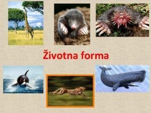 ivotna forma ta je ivotna forma Skup adaptivnih