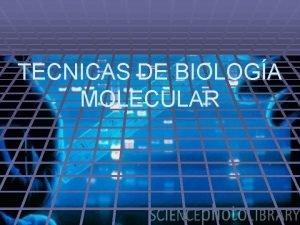 TECNICAS DE BIOLOGA MOLECULAR ENDONUCLEASAS O ENZIMAS DE