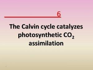 6 The Calvin cycle catalyzes photosynthetic CO 2
