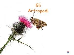 Gli Artropodi Artropodi Gli Artropodi sono animali invertebrati