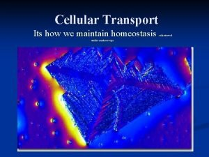 Cellular Transport Its how we maintain homeostasis under
