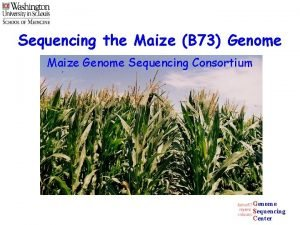 Sequencing the Maize B 73 Genome Maize Genome