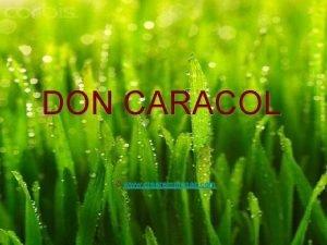 DON CARACOL www crearempresas com Promotores Empresa creada