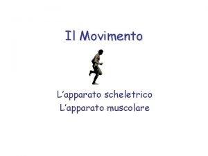 Il Movimento Lapparato scheletrico Lapparato muscolare Il Movimento