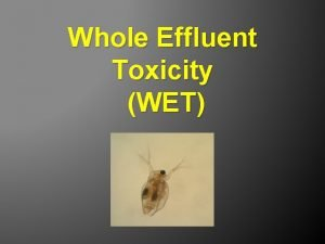 Whole Effluent Toxicity WET WET and the IPs