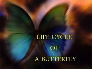 LIFE CYCLE OF A BUTTERFLY A butterfly starts