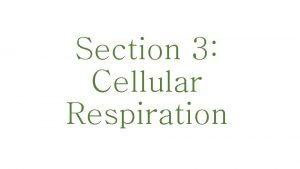 Section 3 Cellular Respiration Cellular respiration occurs in