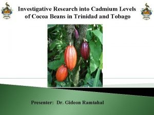 Investigative Research into Cadmium Levels of Cocoa Beans