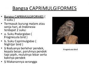 Bangsa CAPRIMULGIFORMES Bangsa CAPRIMULGIFORMES 4 suku Termasuk burung