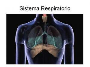 Sistema Respiratorio Sistema Respiratorio Vie aeree superiori Scalda