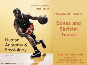 Chapter 6 Part B Bones and Skeletal Tissue