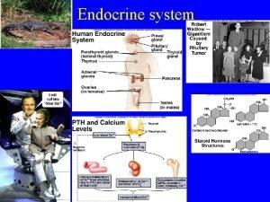Endocrine system Endocrine system 3 types of regulatory