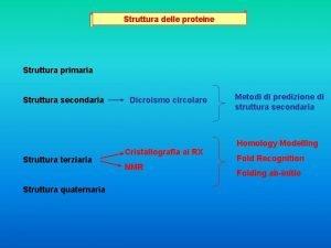 Struttura delle proteine Struttura primaria Struttura secondaria Struttura