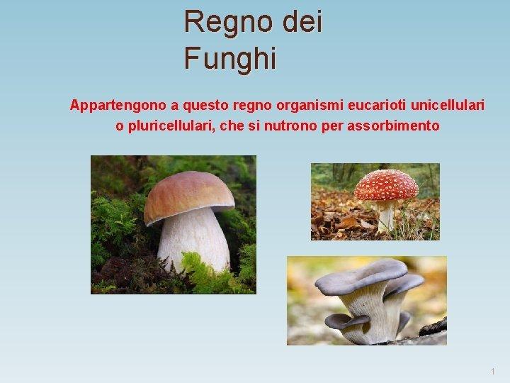 Regno dei Funghi Appartengono a questo regno organismi