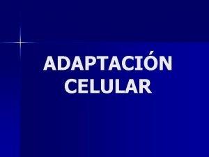 ADAPTACIN CELULAR ADAPTACIN CELULAR ESTRESS Demanda funcional aumentada