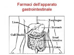 Farmaci dellapparato gastrointestinale Farmaci apparato gastrointesinale e metabolismo